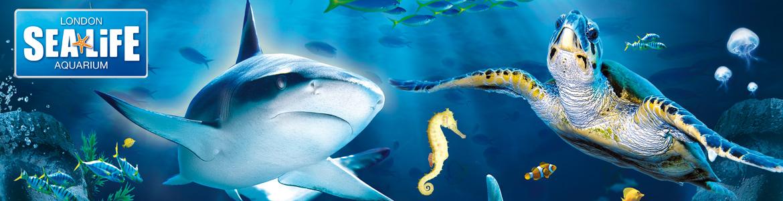 Sea life centre deals uk
