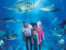 The National SEA LIFE Centre