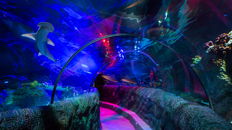 Sea Life Loch Lomond Aquarium Tickets 2for1 Offers