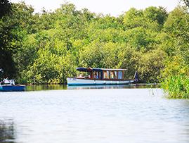 Liana Electric Boat Trip