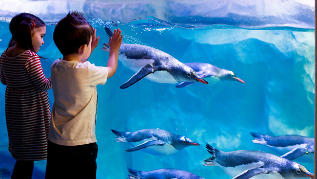 SEA LIFE London - Family Offer