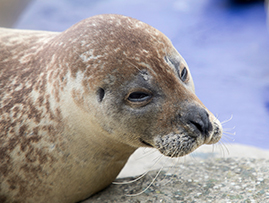 SEA LIFE Hunstanton Aquarium